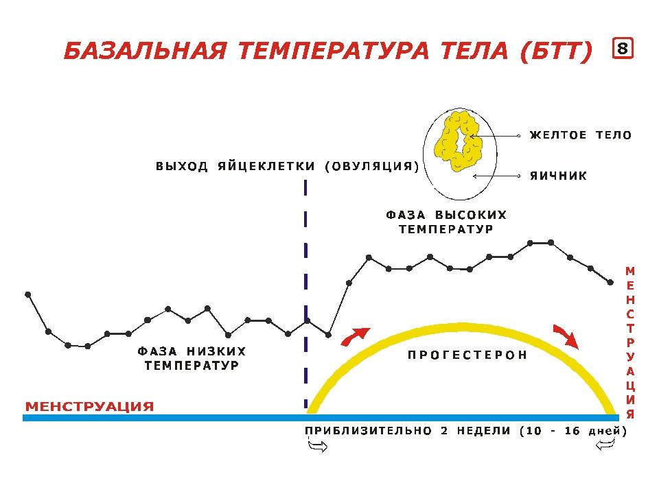 Базальная температура тела